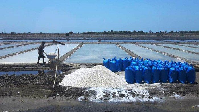 petani-garam-di-pamekasan-02072019.jpg