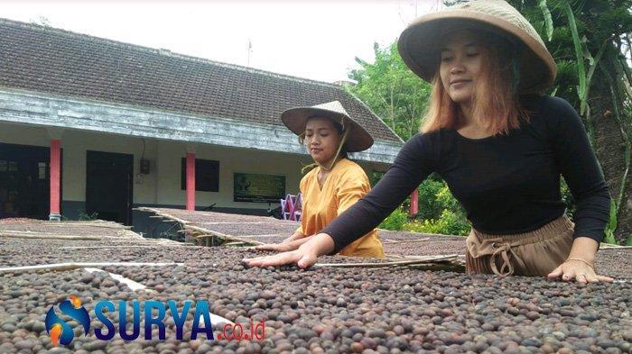 Olah Sendiri Kopi Robusta, Petani di Blitar Kuasai Jawa Sampai Bali - petani-kopi-blitar-1.jpg