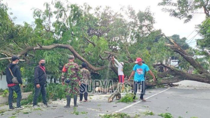 Pohon Tumbang Timpa Teras Rumah Warga di Kota Blitar