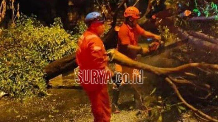 Hujan Deras Disertai Angin, Pohon Tumbang Tutup Jalan di Semanding Kabupaten Tuban