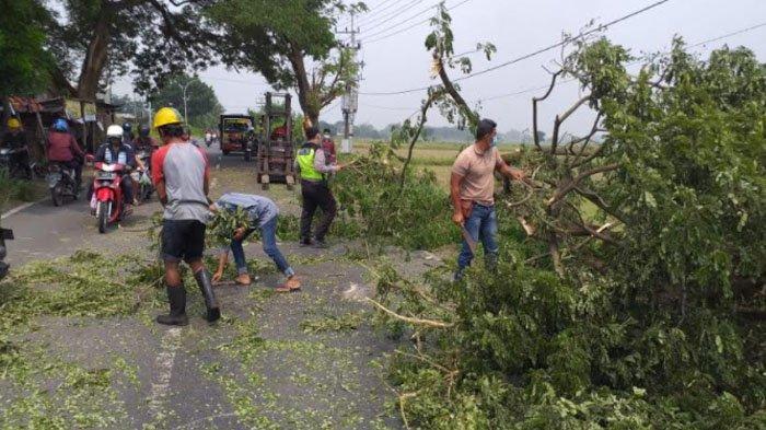 Pohon Tumbang Sempat Tutup Sebagian Jalur Alternatif Cerme Menuju Benjeng Kabupaten Gresik