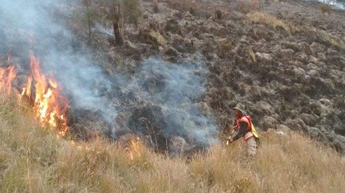Diguyur Hujan, Kebakaran Hutan di Lereng Gunung Semeru Dinyatakan Berakhir