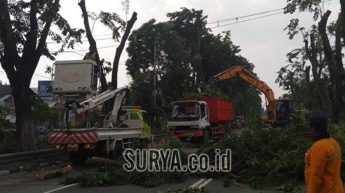 Antisipasi Cuaca Ekstrem, DKRTH Surabaya Gencar Lakukan Perantingan Pohon