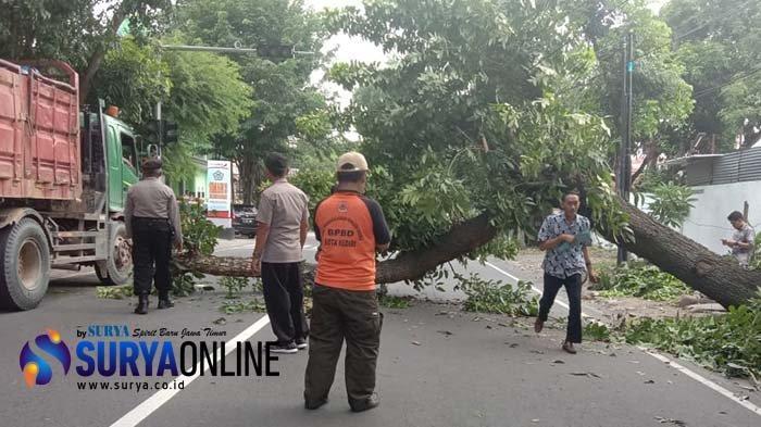 Pengendara Motor Tertimpa Pohon Tumbang Akibat Angin Kencang di Kediri