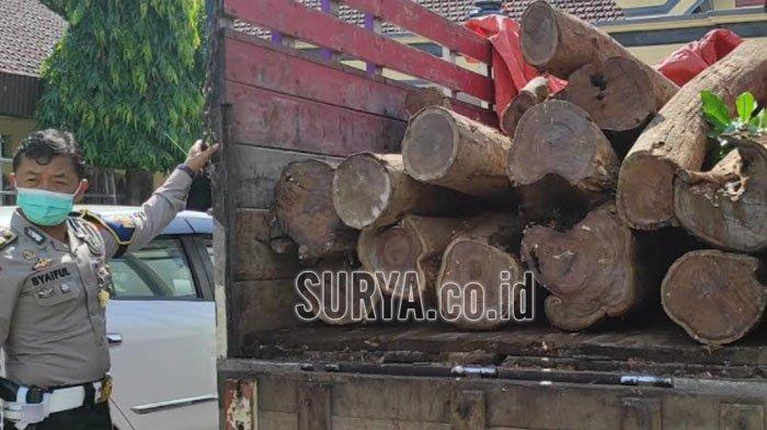 Polisi Tangkap 5 Pelaku Ilegal Logging Sono Keling di Ponorogo, Ngaku Dipesan dari Luar Jatim