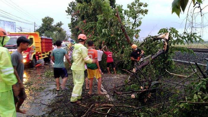 Hujan Disertai Angin Kencang Menerjang Bojonegoro, Belasan Pohon Tumbang dan Kabel PLN Putus
