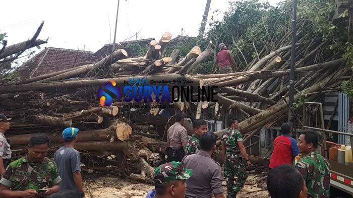 Warga Pernah Minta DLH Kota Blitar Potong Pohon yang saat Ini Tumbang