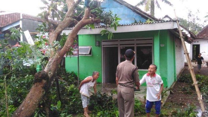 Angin Kembali Menumbangkan Pepohonan di Kabupaten Jember. Kali ini Giliran Ambulu