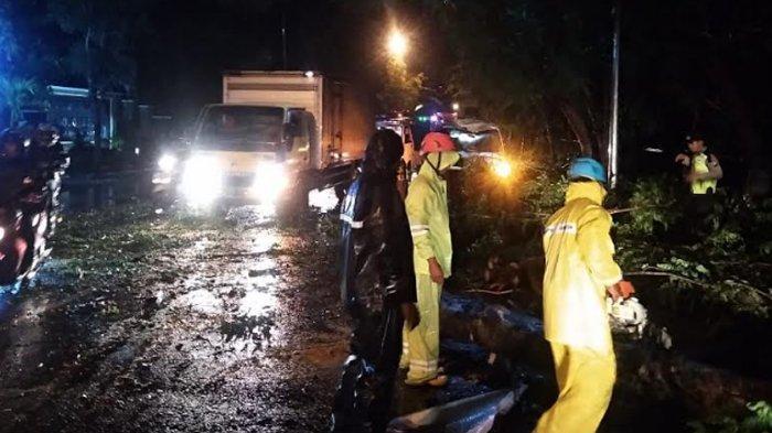 Hujan Deras dan Angin Kencang Sebabkan Pohon di Bojonegoro Tumbang dan Menimpa Mobil
