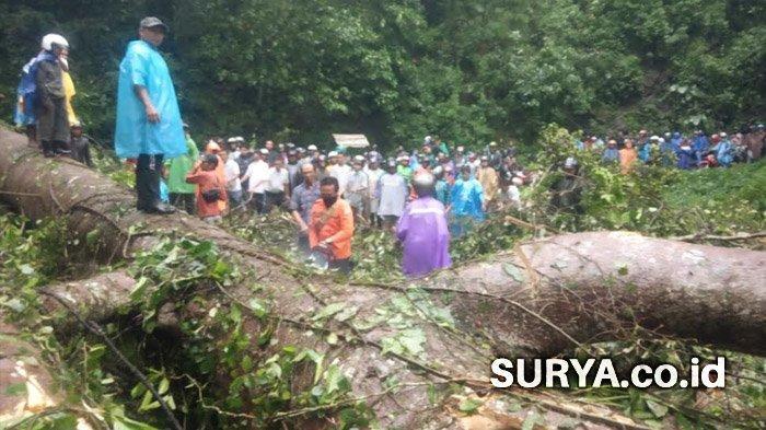Wajib Waspada Saat Melintas di Gunung Gumitir, Rawan Tanah Longsor dan Pohon Tumbang