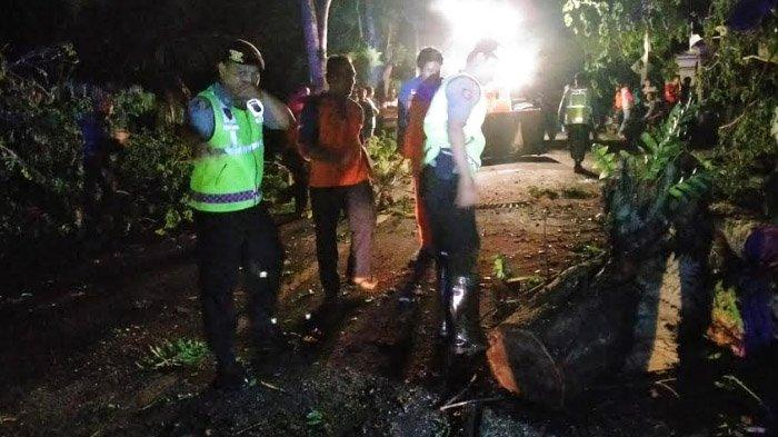 Pohon Tumbang di Kabupaten Trenggalek, Sempat Bikin Arus Kendaraan Jalan Nasional Terhambat