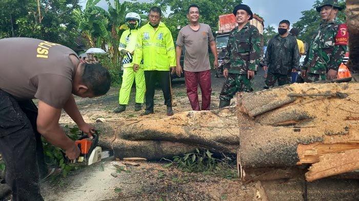 Hujan Deras Disertai Angin di Lumajang, Pohon Beringin Setinggi 10 Meter Roboh Tutup Jalan Nasional