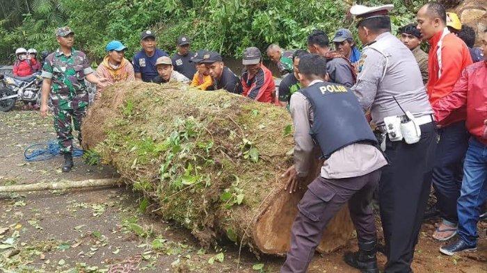 Diterjang Hujan Deras, Pohon-pohon di Jalur Pendakian Gunung Semeru di Lumajang Tumbang