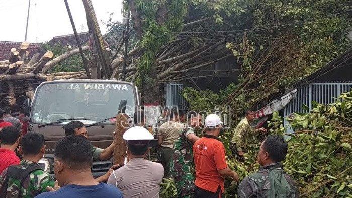 Angin Kencang Sapu Kota Blitar, Sejumlah Pohon Tumbang dan Timpa Teras 2 Rumah
