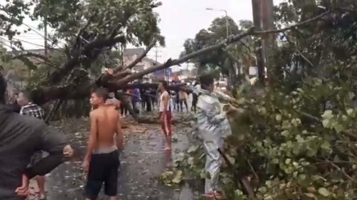 VIDEO - Angin Kencang dan Hujan Kembali Menumbangkan Pepohonan di Jember