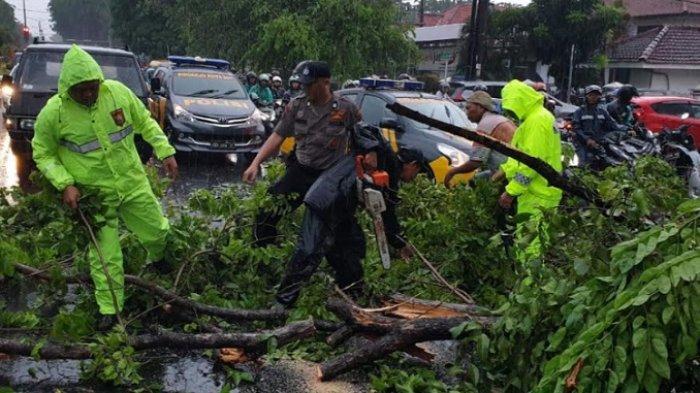 Hujan Deras di Sidoarjo, Dua Pohon Tumbang Menimpa Mobil dan Dua Motor