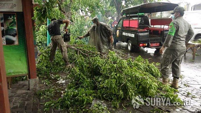 Hujan Deras Disertai Angin Kencang Akibatkan Pohon Tumbang di Sejumlah Titik Kota Kediri