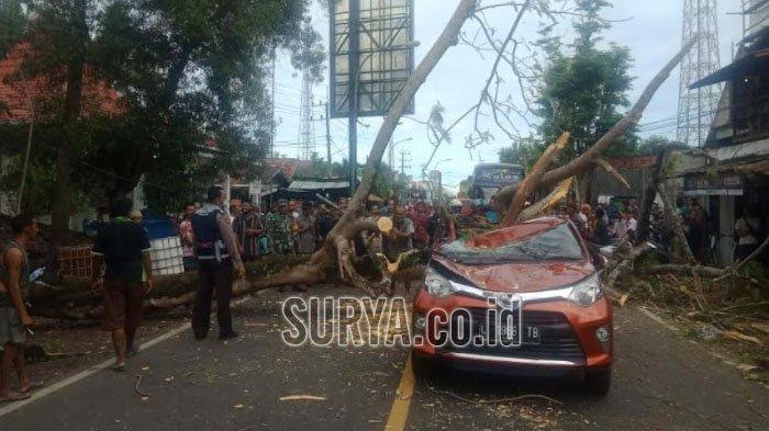 Pohon Tumbang Timpa Toyota Calya di Bangkalan, Penumpang Warga Surabaya Dilarikan ke RS