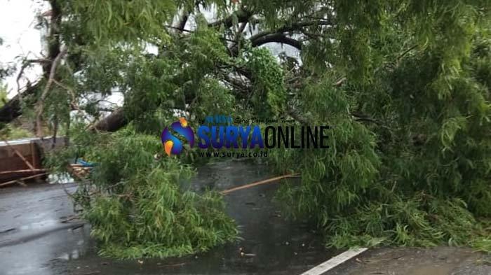 2 Pohon Tumbang Karena Hujan Deras dan Angin Kencang, Jalur Pantura Gresik Sempat Macet