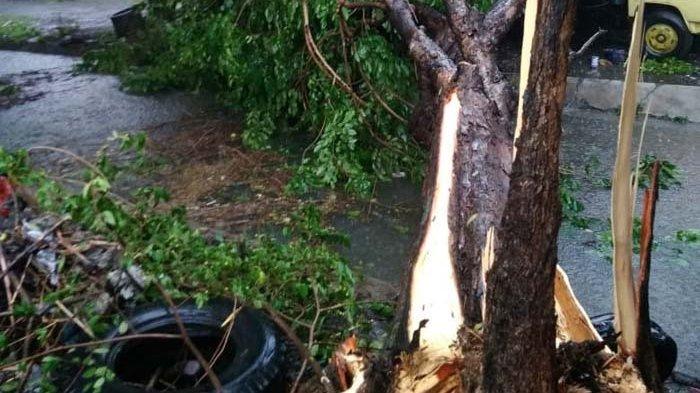 Pohon Tumbang Tewaskan Pengendara, DKRTH Surabaya Duga Akibat Kecepatan Kereta