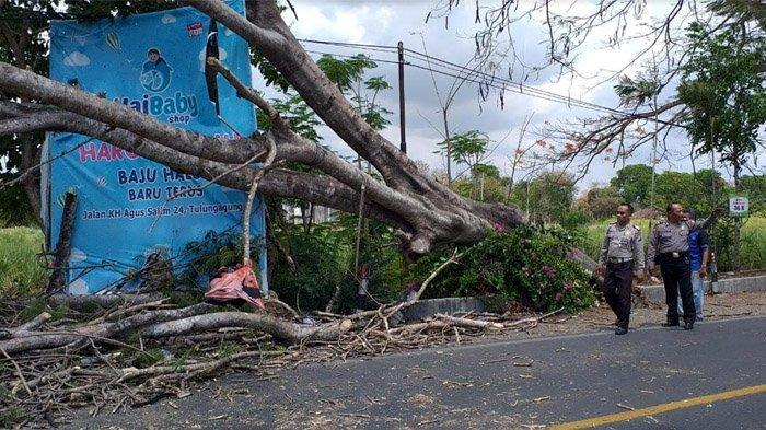 Nenek Penjual Jajanan yang Tertimpa Pohon Tumbang Dirujuk ke RSUD dr Iskak Tulungagung