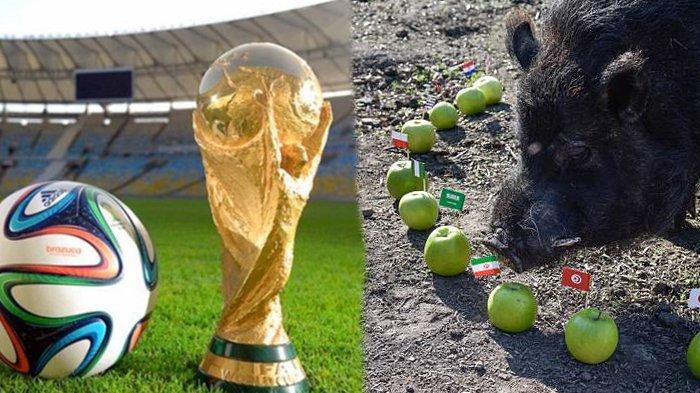 Piala Dunia 2018 - 3 Binatang ini Dianggap Mampu Prediksi Negara yang Akan Keluar Sebagai Juara