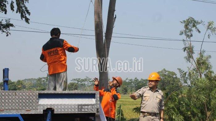 Antisipasi Pohon Tumbang, Ini yang Dilakukan BPBD Kabupaten Probolinggo