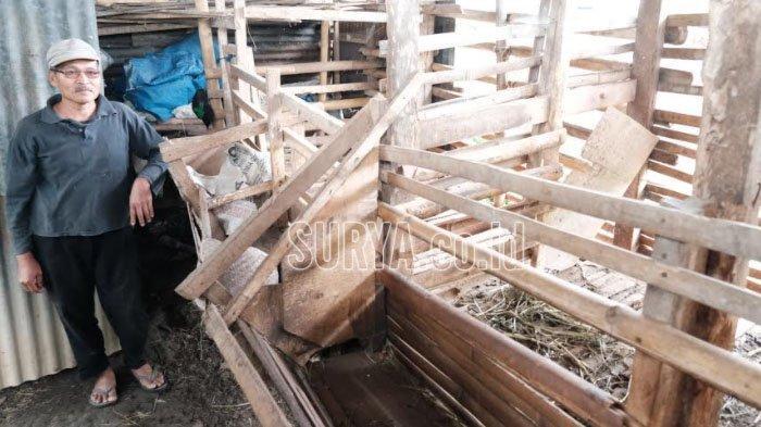 Puluhan Kambing Milik Warga Desa Junrejo Kota Batu Raib, Korban Tak Hanya Satu Orang