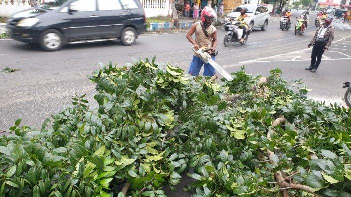 Dua Wanita Tertimpa Pohon Mahoni di Mojokerto, Tak Bisa Menghindar Setelah Dihantam Dump Truk
