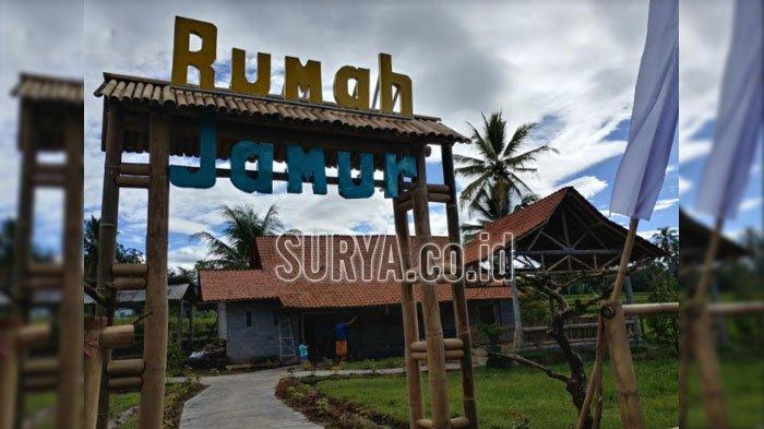 Rumah Jamur di Desa Wisata Kemiri Kabupaten Jember