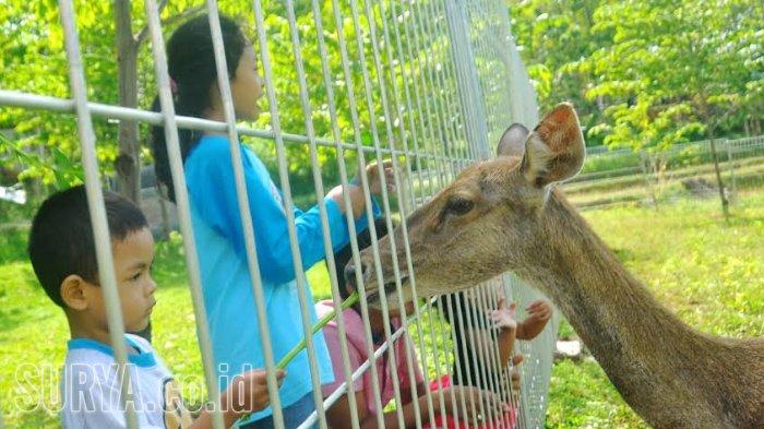 Pesona Wisata Alam Bukit Dhoho Indah, Destinasi Liburan untuk Keluarga