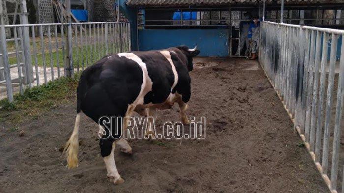 Menteri Pertanian : Genjot Ekspor Sperma Sapi Domestik Produksi BBIB Singosari Kabupaten Malang
