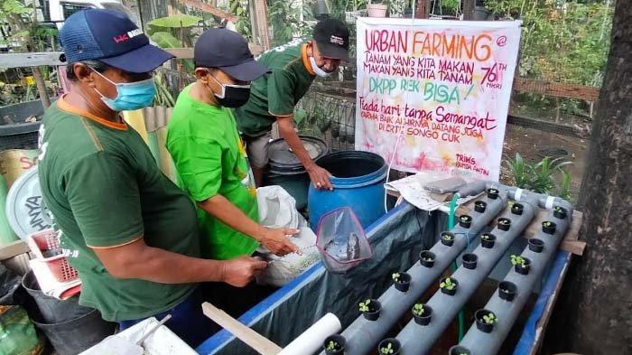 Satgas Serba Guna Tetap Semangat Rawat Kampung hingga Budidaya Lele dan Ikan Gabus meski Tak Digaji