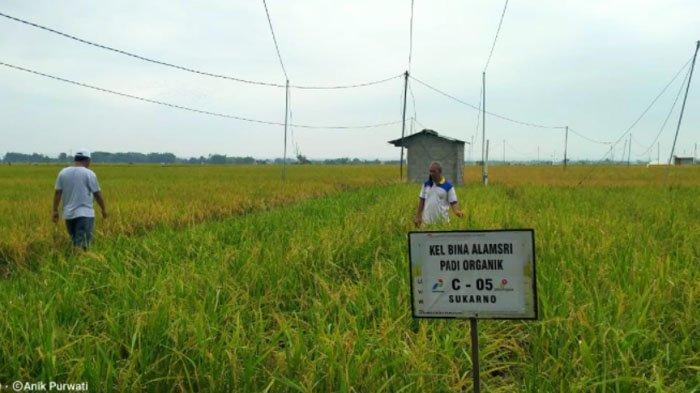 Program CSR Pertamina EP Asset 4 Field Cepu Alami Perluasan Lahan, Akhir 2021 Ditarget hingga 20 Ha