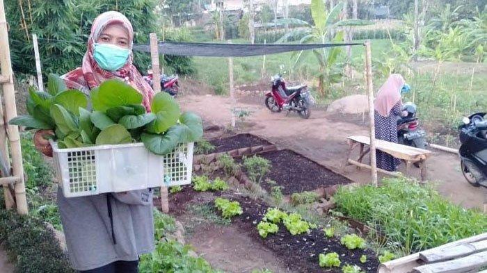 Menikmati Sayuran Segar di Sayur Omah Junggo Prigen Kabupaten Pasuruan