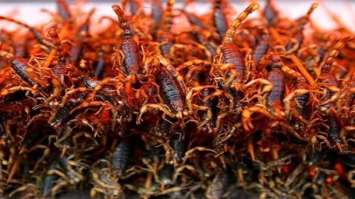 15 Serangga Terlezat di Dunia, Beranikah Anda Mencobanya ?