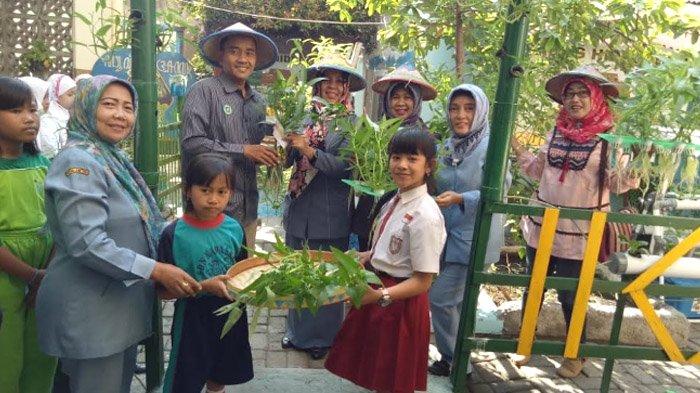 Wali Murid dan Guru  SDN Kapasari 8 Surabaya Mengaku Senang Panen Kangkung dari Hidroponik Sekolah