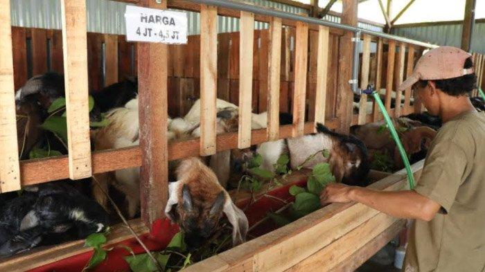 Mantan Driver Sidoarjo Sukses Buka Minimarket Kambing-Domba; Omzetnya Ratusan Juta Jelang Idul Adha