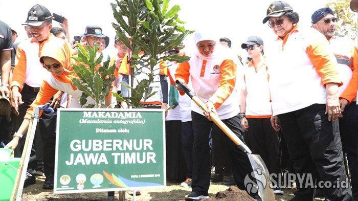 Menteri Siti Nurbaya dan Gubernur Khofifah Jadikan Kota Batu Pusat Bibit Pohon Macadamia