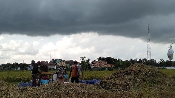 Sudah Masuk e-RDKK, 82.000 Petani Sampang Belum Miliki Kartu Tani