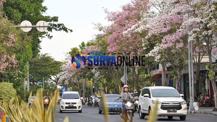 Warga Surabaya Asyik Selfie dengan Latar Bunga Tabebuya yang Bermekaran, 'Seperti di Jepang'
