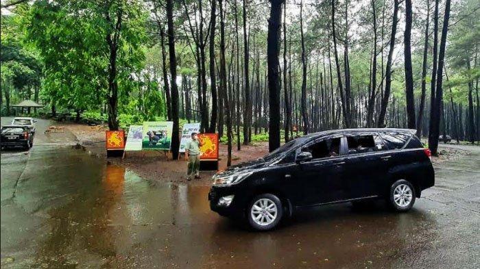Tahun Baru Imlek, TSP Ajak Wisatawan Berkenalan dengan Jaliteng, Banteng Jawa