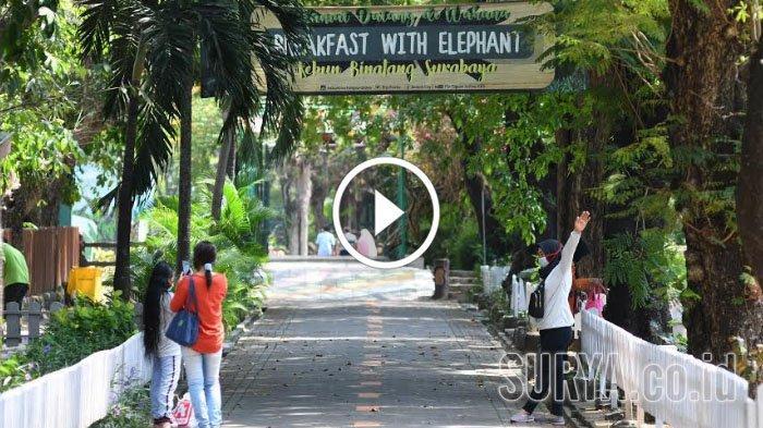 VIDEO Suasana Kebun Binatang Surabaya saat Libur Idul Adha 2020, Masih Sepi Pengunjung