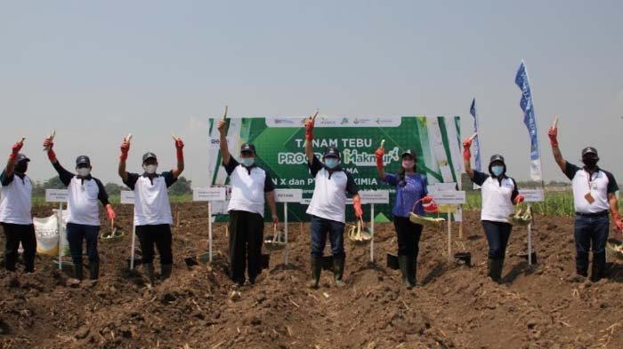PTPN X Realisasikan Pemupukan oleh Program Makmur Agrosolusi 41 Persen Target Areal Tebu
