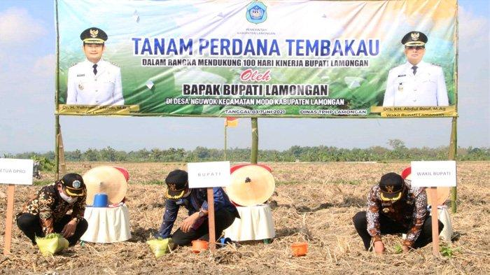 Pasar Daerah Lesu, Produktivitas Tembakau Lamongan Justru Melonjak dan Tempati Lima Besar di Jatim