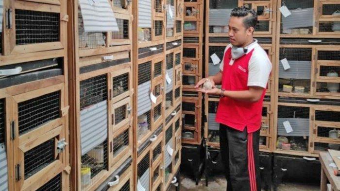 PNS Pemkot Blitar Sukses Ternak Burung Puter Trah Juara, Omzet Puluhan Juta Per Bulan