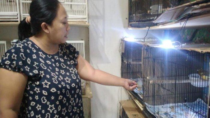 Nekat Geluti Burung selama Pandemi, Wanita di Madiun Mampu Meraup Rp 14 Juta Sebulan;