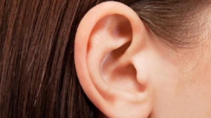 Tes Kepribadian - Introvert atau Ekstrovert? Bentuk Telinga Bisa Cerminkan Kepribadianmu, Cek Segera