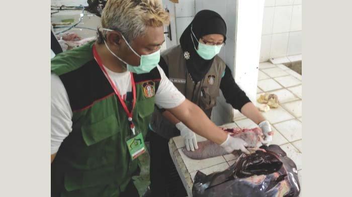 Langkah DKPP Kota Blitar setalah Ditemukan Puluhan Ekor Hewan Kurban Terpapar Penyakit Cacing Hati