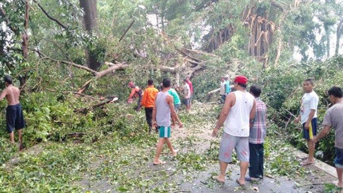 Angin Kencang dan Hujan Lebat di Mojokerto selain Porak Porandakan Rumah, Tumbangkan Pohon Beringin